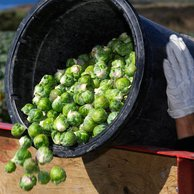California Agriculture Labor Law News